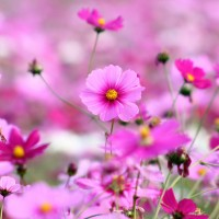 beautiful_purple_flowers-wide