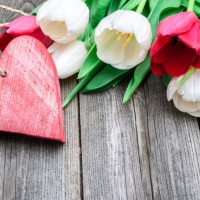 fresh tulips with a red heart