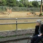 Giraffes and the African Vedlt